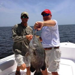 Tripletail caught at Jekyll Island, GA