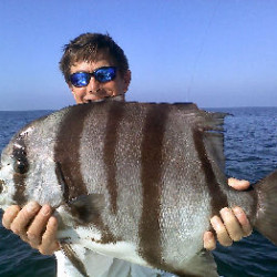 Nice Spadefish caught sight fishing.