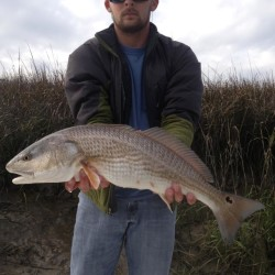 Redfish in Georgia