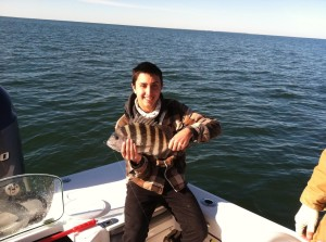 Sheepshead at Jekyll Island