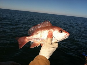 Georgia Red Snapper