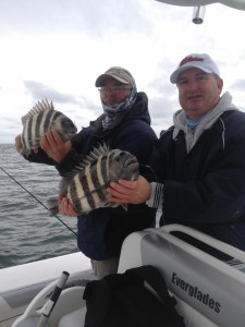 Sheepshead on the Reef
