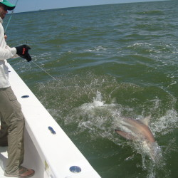 Shark Fishing Charter St. Simons Island