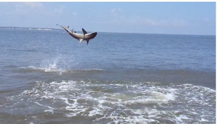 St simons shark and tarpon fishing charters for St simons island fishing report