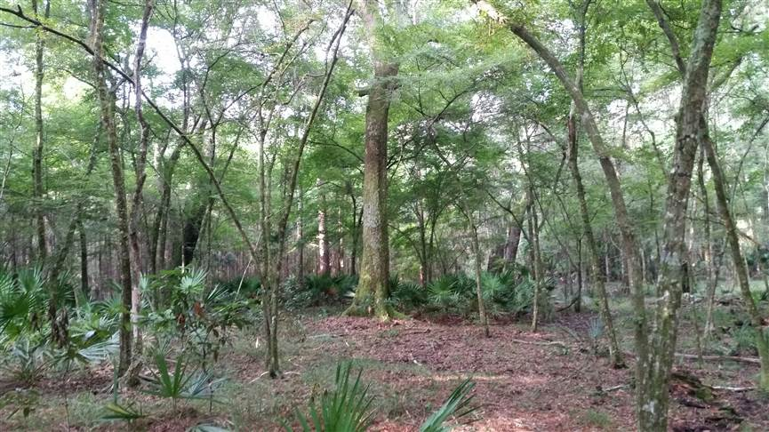 appling county land for sale
