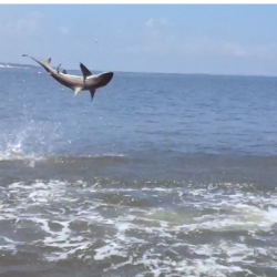 St. Simons Island Shark Fishing